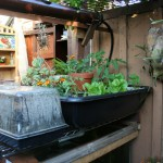 Aquaponics Unit in Back Yard
