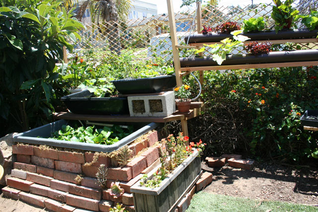 San Diego Aquaponic Unit