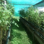 Nicoya Gardens
