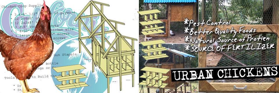 urban-chicken-slide