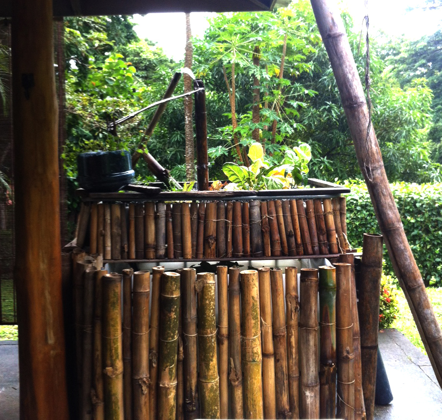 new aquaponics office water feature pura vida