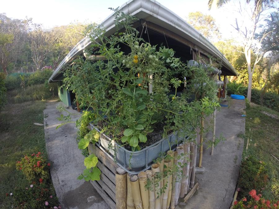 Home-scale garden